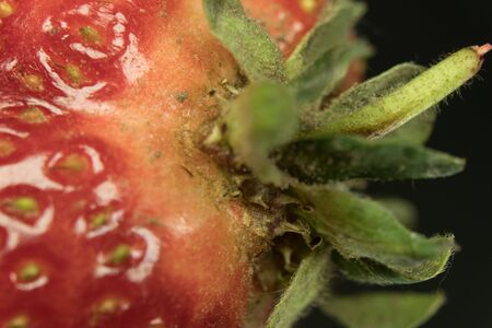 Macro shot of a strawberry. On a mirror black background Banque d'images