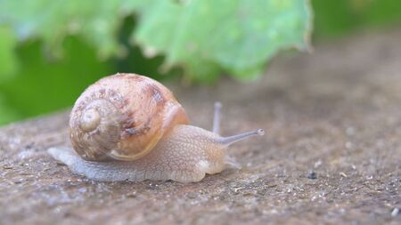 Snail shell between fresh sprout leafs