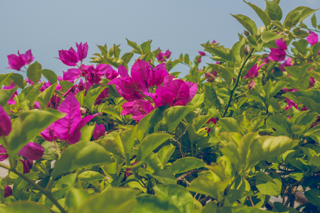 Red flowers on bushes against sky. Close Up Banque d'images - 100713001