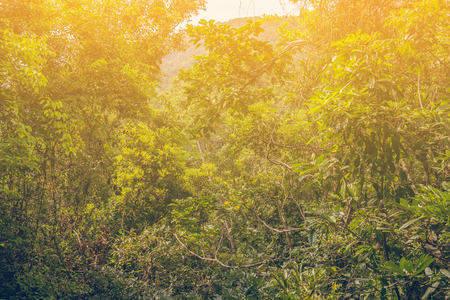 Tropical Jungle in sunday. Color Toned
