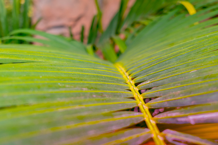 Bright Palm Leaves. Color Toned Imagens