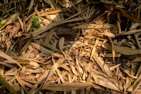 Fallen leaves in Tropical Jungle. Color Toned 版權商用圖片