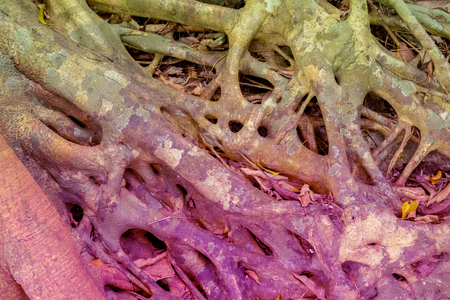 Tree Roots Pattern. Texture Color Toned