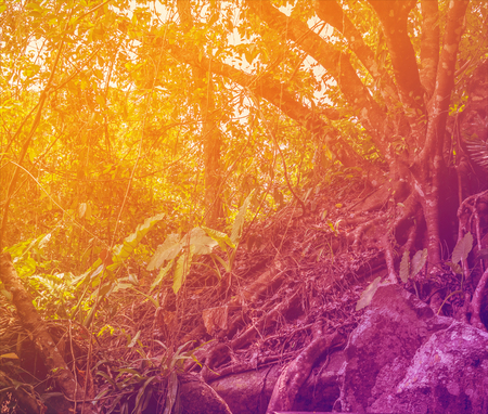 Tropical Jungle in Sunrays. Color Toned