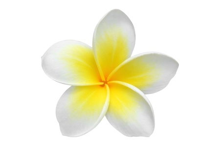 hawaiian lei: Frangipani flower isolated on white  Stock Photo
