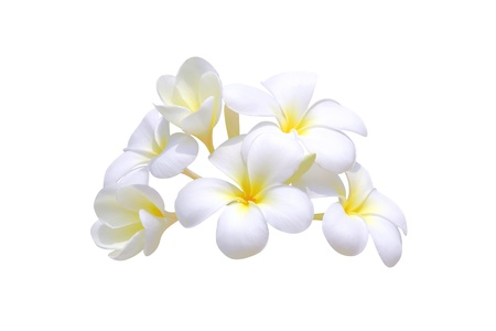 lei: Frangipani on white background