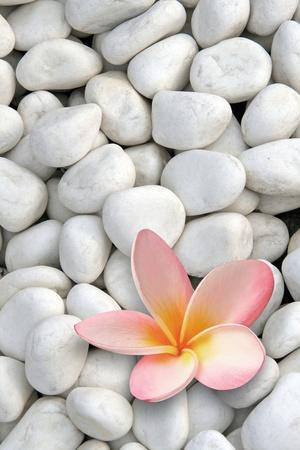 プルメリアの花と白の石