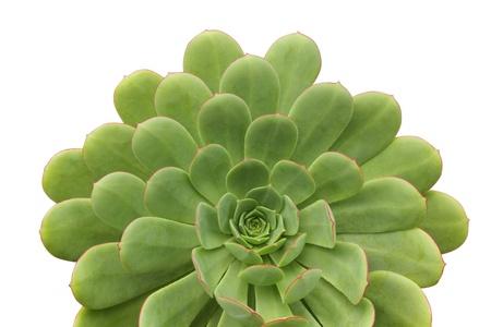 Succulent plant Stok Fotoğraf - 12466960