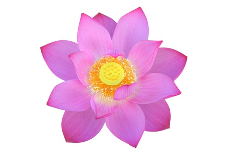 nelumbinis: Lotus flower, isolated