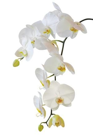 weiße Orchidee Lizenzfreie Bilder