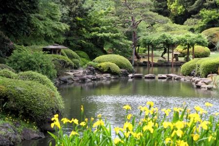 夏の初めに日本の緑の美しい公園 写真素材
