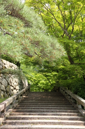 Old stairway into forest Stock Photo - 13918854
