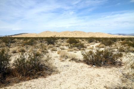 mojave: Desert landscape  Mojave desert    Stock Photo