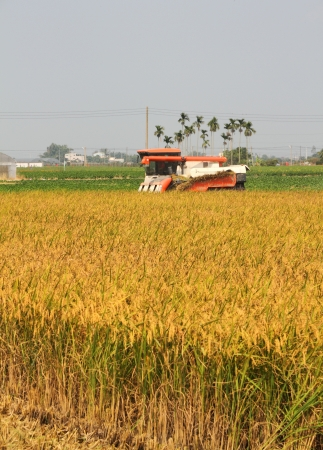 Rice harvester photo