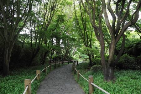 road through forest Stok Fotoğraf
