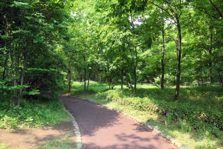 a walkway through forest Stok Fotoğraf - 19628867