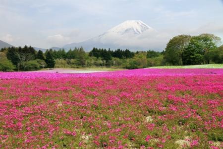 Mount Fuji, Japan Stok Fotoğraf - 19628841