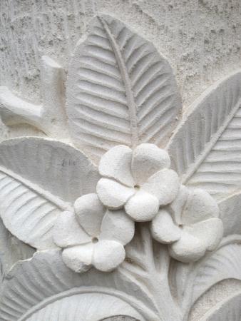 Frangipani flower Stok Fotoğraf