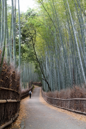 Bamboo grove walkway
