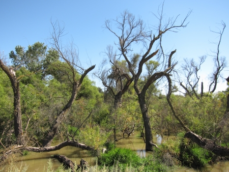 san joaquin valley: swamp Stock Photo