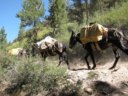 Mule caravan in mountains