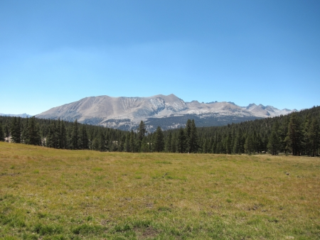 Meadow in Sequoia National Park, California, USA