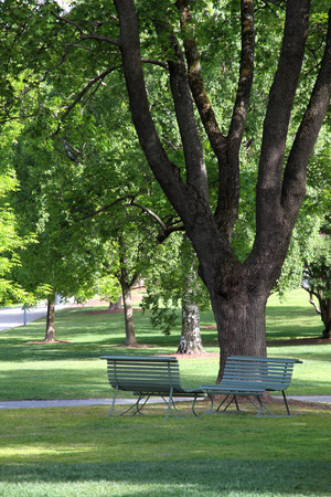 Two chairs under tree in park