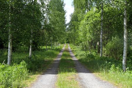 Road in forest Stok Fotoğraf