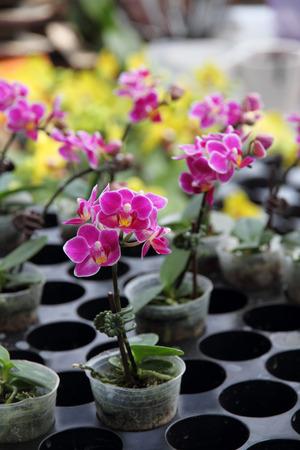 plant in pot: Flower nursery