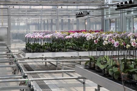 flower nursery: Flower nursery in a modern facility