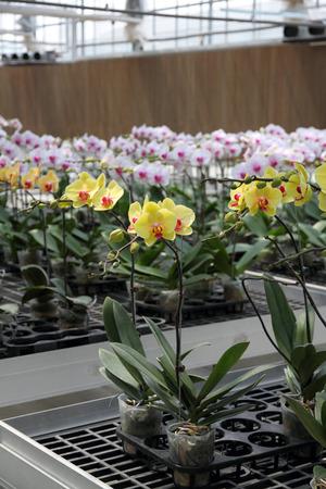 Flower nursery in a modern facility