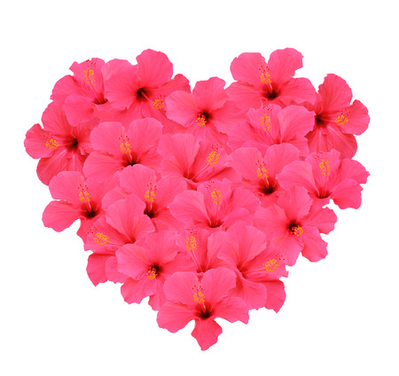 Heart shape bouquet made of Hibiscus flowers (Isolated on white background) Stok Fotoğraf - 56005822