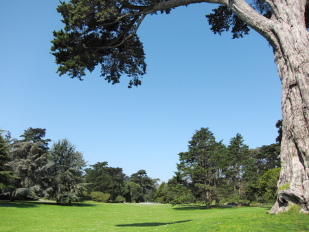 Green beautiful park and blue sky Stok Fotoğraf - 76216195