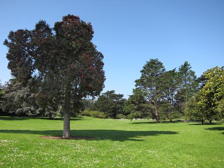 Green beautiful park and blue sky Stok Fotoğraf - 76049012