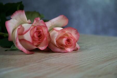 dolce vita rose on wood with gray background Standard-Bild