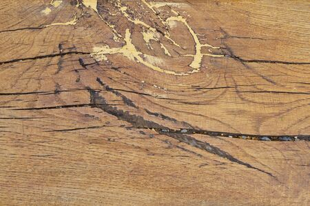 The texture of wood cut across, Old wood cut texture.