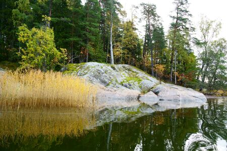 typical Scandinavian coast, rocky coast, yellow reeds, and if you are lucky, then the calm Baltic Sea