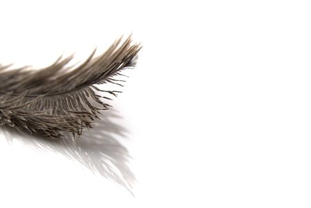 Single fluffy feather isolated on white with copy space