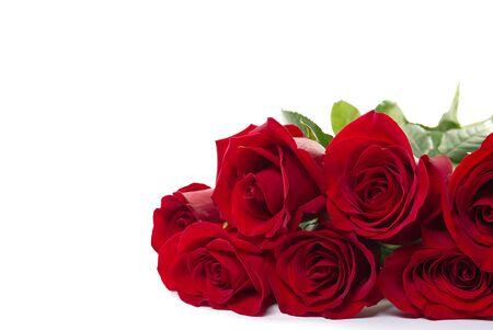 schöner Strauß roter Rosen liegt auf weißem Hintergrund. Junge rote Rosen duften sehr stark. Niederländische Blumen sind auf der ganzen Welt beliebt und erfreuen Millionen von Frauen auf der ganzen Welt.