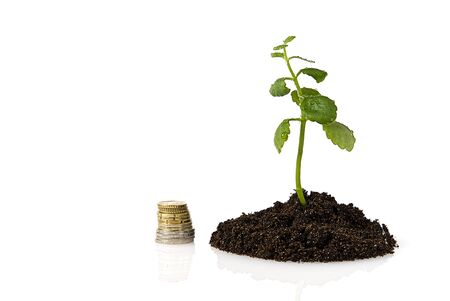 money tree growing. economic downturn. concept of investment growth like a growing tree Stock Photo