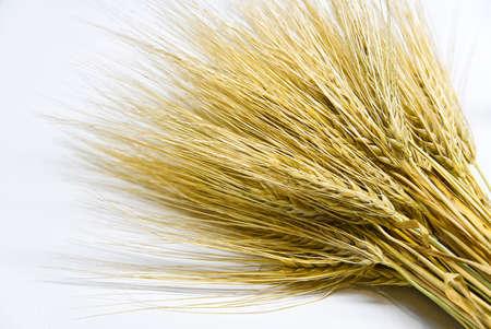 Wheat bundle close up on white background.