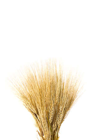 ears of ripe yellow wheat on white background close-up Stockfoto