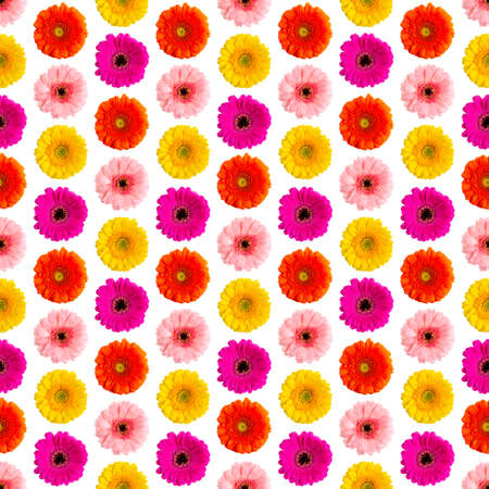 Seamless pattern of colorful gerbera on a white Germini photo converted into a seamless pattern Фото со стока