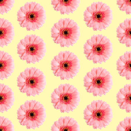 Seamless pattern of pink gerbera on a white Germini photo converted into a seamless pattern