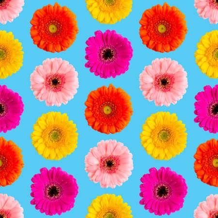 Seamless pattern of colorful gerbera on a Blue. Germini photo converted into a seamless pattern Фото со стока