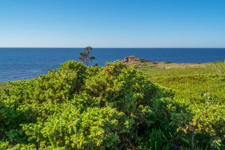 Green juniper on the steep shore of the White Sea Stockfoto