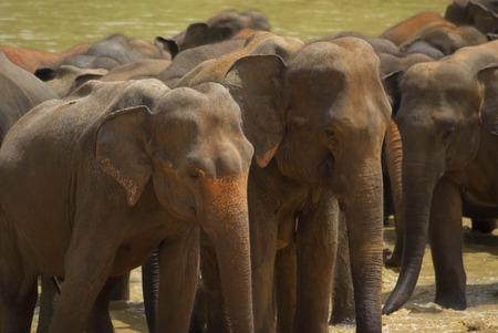 heard: Elephant Heard