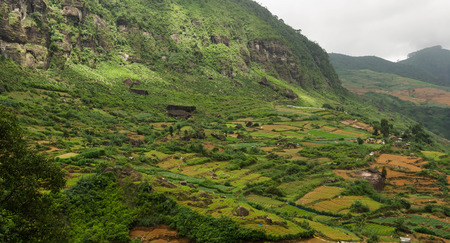 agriculture sri lanka: Valley with vegetable fields in tropical mountains