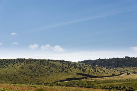 plains: Horton Plains national park, Sri Lanka
