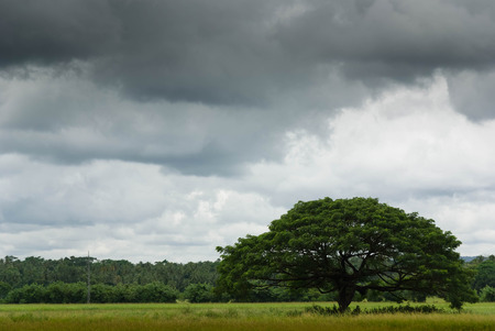 stormy sky: Tree in tropical landscape with stormy sky